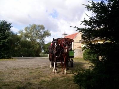 IX Konna pielgrzymka Trzebnica- Licheń 2014