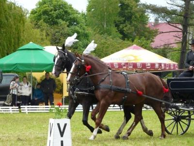 Święto Konia Siedlec Trzebnicki 2014
